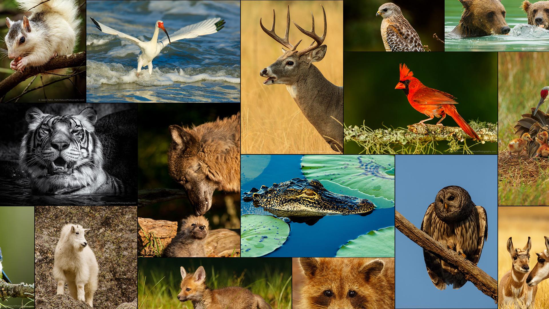 wildlife-up-close-Featured-Image2