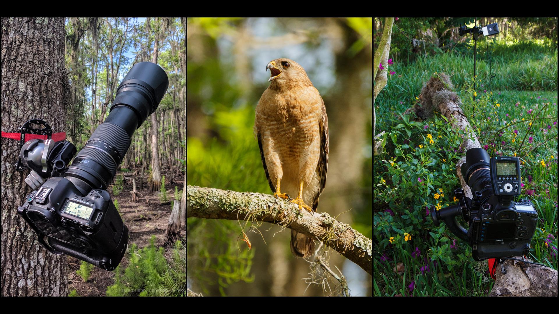 Featured-Image-Platypod-Wildlife