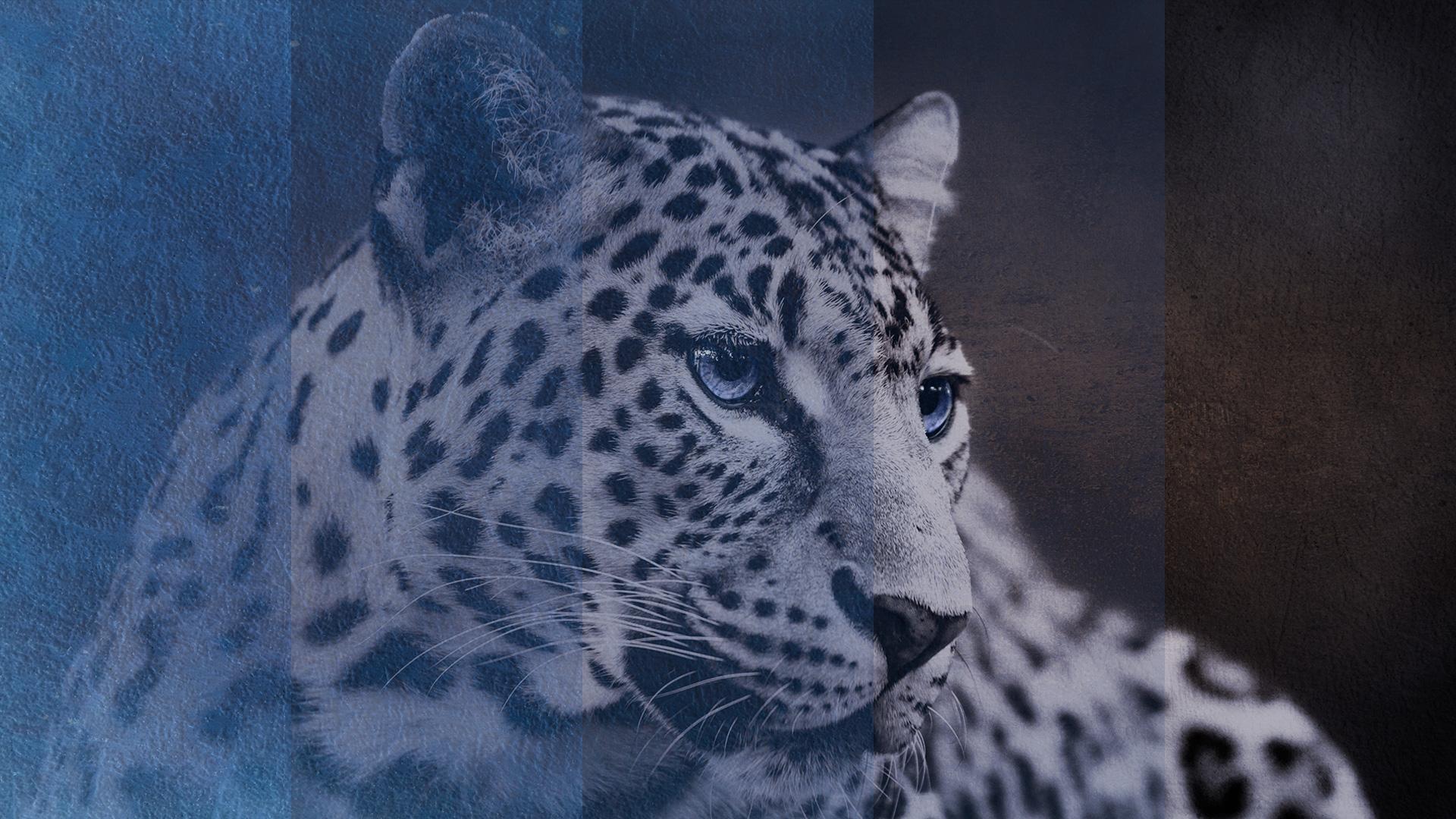 FEATURED-jhahn-leopard-part-2