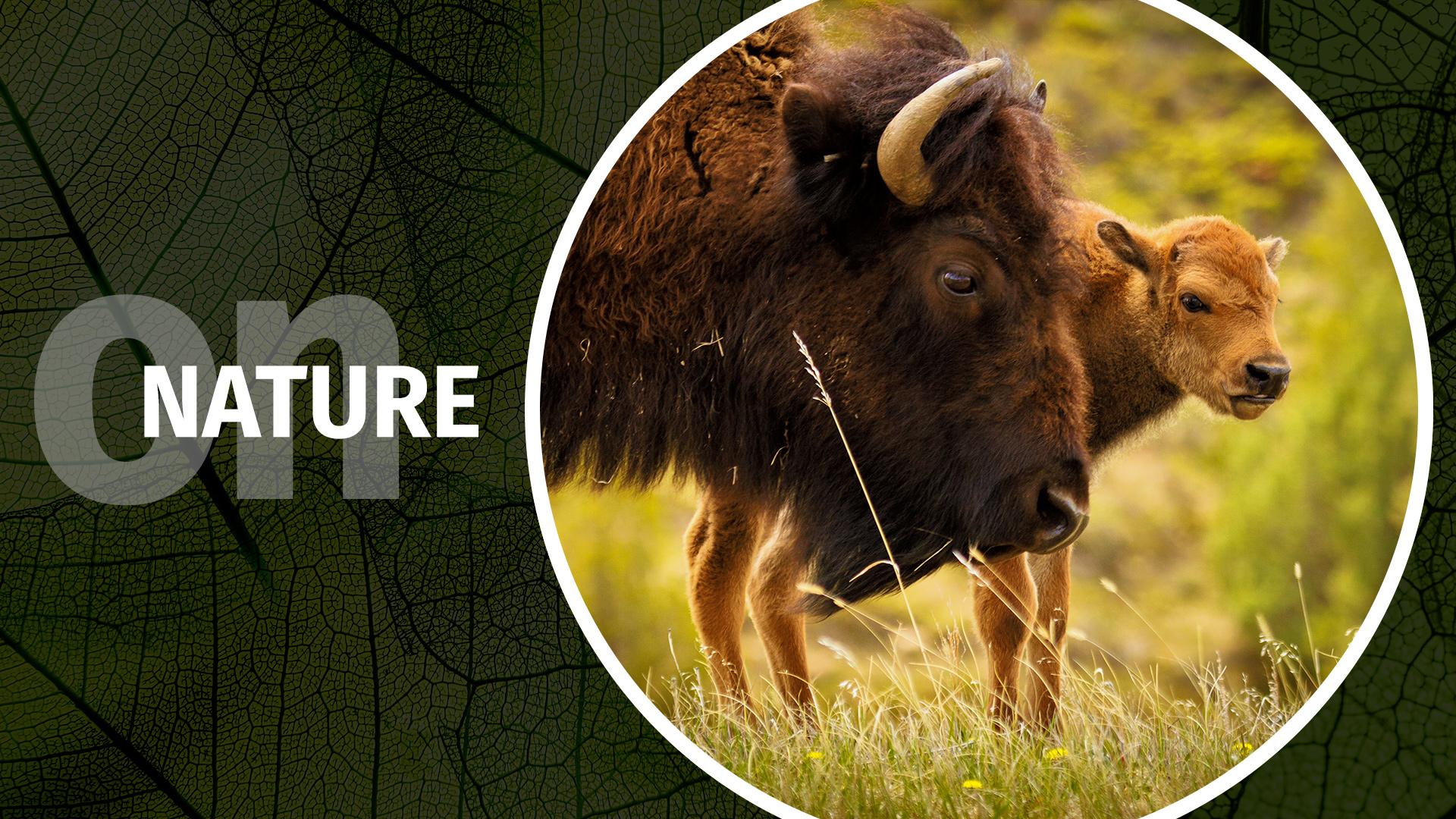 FEATURED-wildlife-movingwildlife