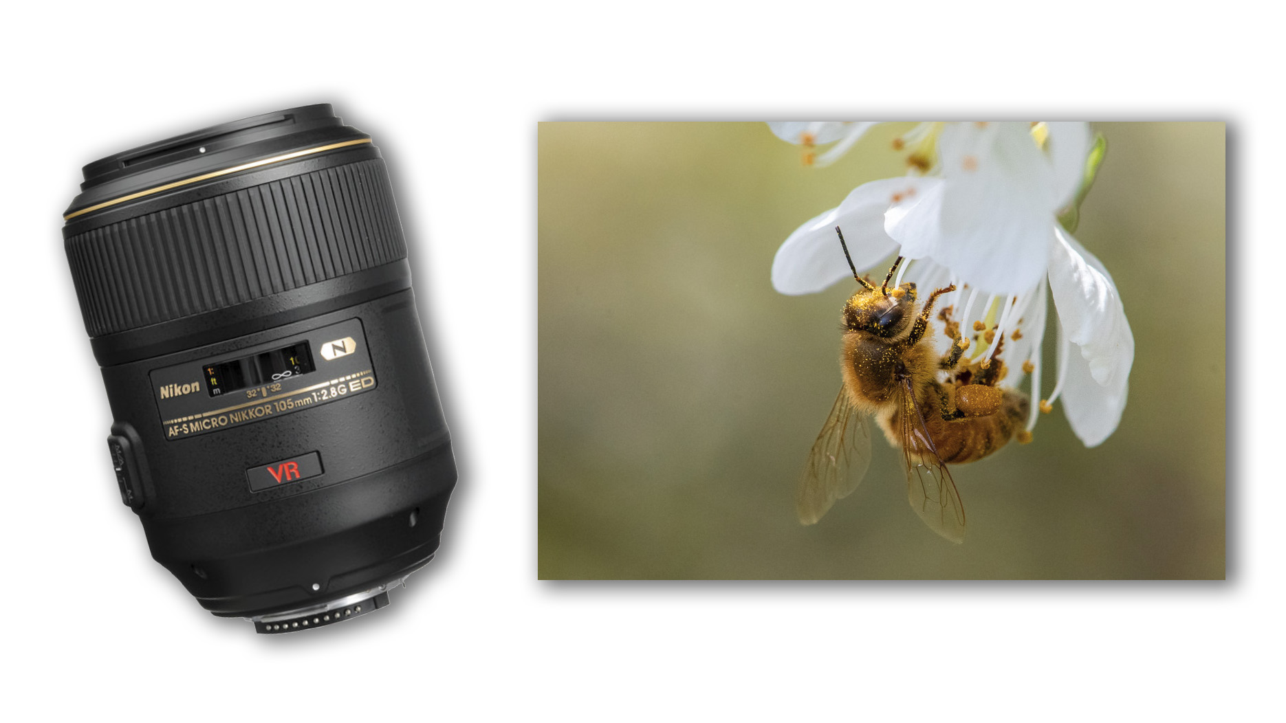 Nikon_105mm_FeaturedImage_1920px