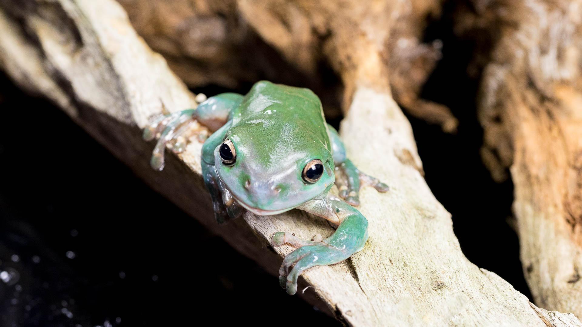 Julie Powell_frog Header