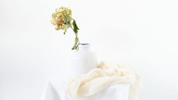 Julie-Powell_White_Header-2560-new (1)