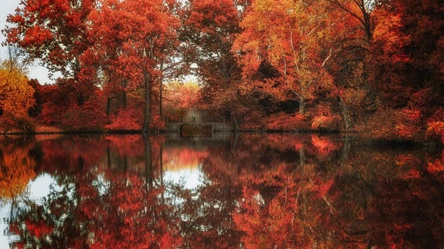 fall trees reflections