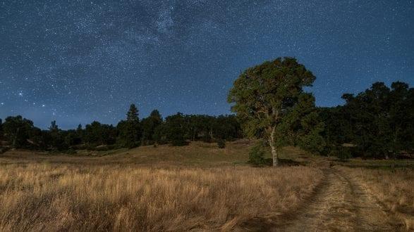 2104_kenlee_pine-flat-sierras_200626_2237_86sf28iso400_tree-MW-path_flat-cropmore-2560X1440PX HEADER PHOTOFOCUS