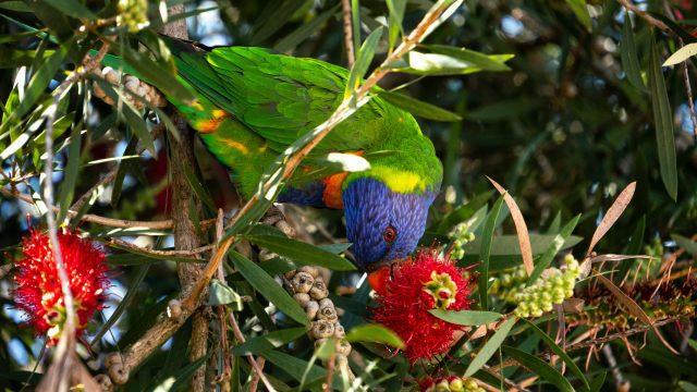 10 tips for better bird photography